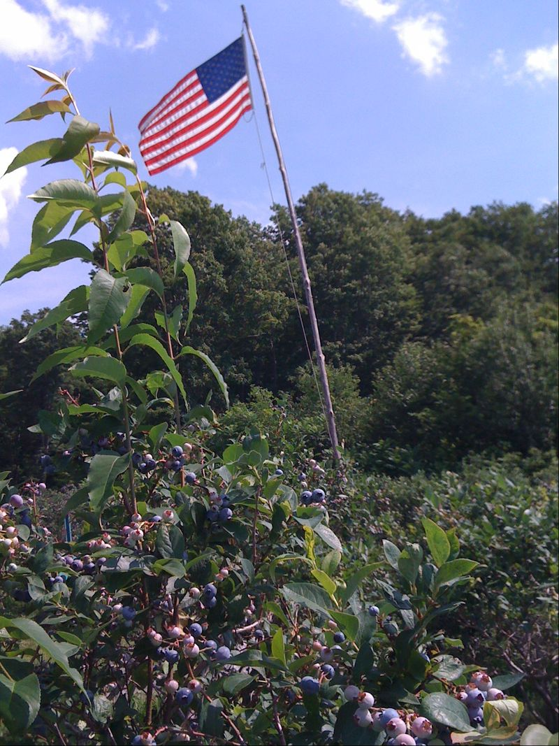 Flag at blueberries