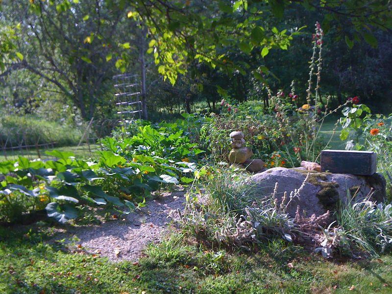 My garden in aug