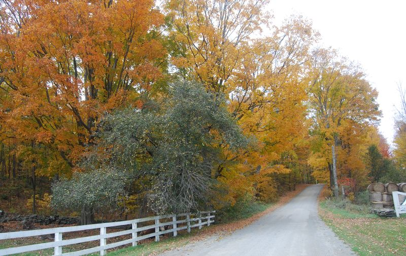 Fall foliage herrick