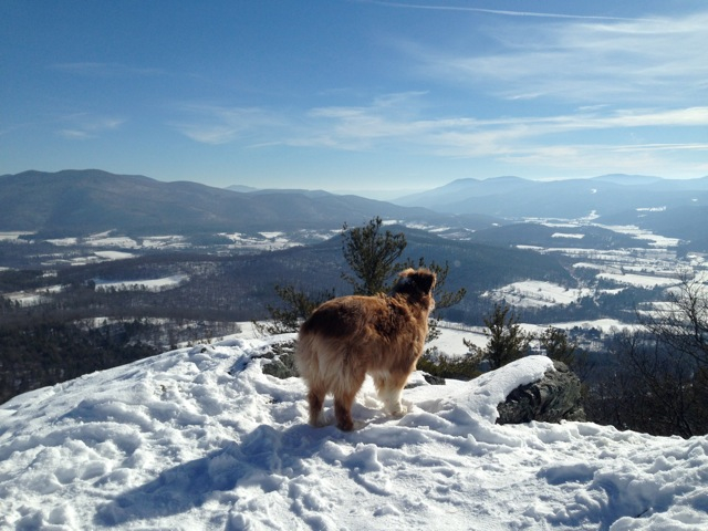 Ziggy hiking on haystack